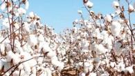 La campagne agricole 2013-2014 a tenu toutes ses promesses, avec une production record dans les trois sous – secteurs de l'Agriculture, de l'Elevage et de la Pêche. Les performances réalisées...